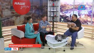 Наше УТРО на ОТВ – международный  день кошек