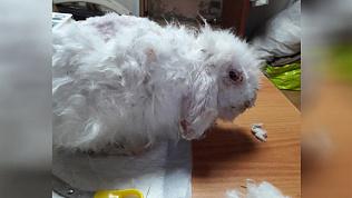 Истерзанного кролика привел в чувства челябинский зоозащитник