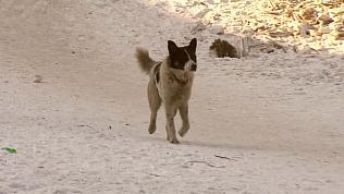 Бродячие псы нападают на детскую обувь в челябинских дворах