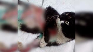 Бездомную кошку «зажевало» в двигатель автомобиля, и теперь ей нужна помощь