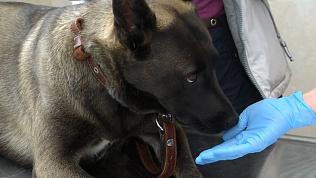 В Челябинске бесплатно привьют от бешенства домашних животных