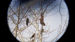Лесного хищника на территории чебаркульской школы сняли на видео