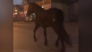 Заблудившуюся лошадь на проезжей части сняли на видео