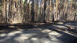 Штормовой ветер снес козырек и повалил деревья в Челябинске