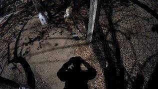 На Южном Урале стая ворон атаковала горожан возле детского сада