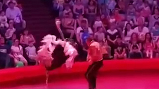 Видео нападения циркового страуса на зрителей набирает популярность в сети