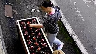 Женщины, ворующие цветы с клумбы, возмутили южноуральцев