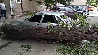 Дерево рухнуло на авто в челябинском дворе