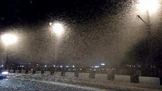 Массовое нашествие мотыльков на город сняли на видео очевидцы