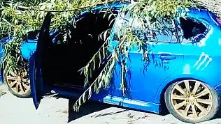 Упавшее дерево придавило машину в Челябинске