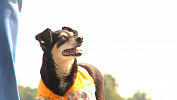 Собака Шпонка помогает дорожникам укладывать асфальт в Челябинской области