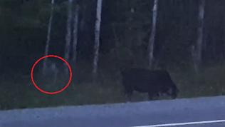 «Нечто» на обочине трассы сняли на видео очевидцы