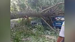 В Челябинске дерево вновь придавило автомобиль