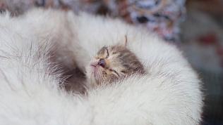 Жительница города спасает кошек и собак