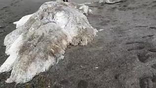 «Нечто» на берегах Камчатки обнаружили местные жители