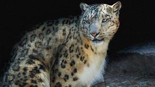 В челябинском зоопарке выбрали самого симпатичного самца