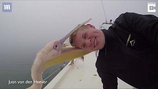 Игривый пеликан укусил туриста за голову во время фотосессии