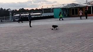 Необычного экстремала встретили жители Челябинска возле памятника Курчатову