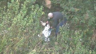 Мужчина нанес собаке несколько смертельных ударов