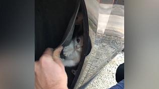 Малышей-котят достали из-под крыла машины жители Магнитогорска