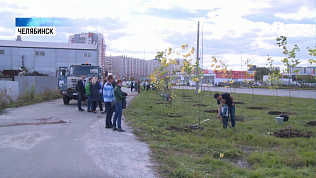 Волонтеры восстанавливают «Зеленый щит»