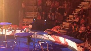 Во время выступления цирка Багдасаровых один из хищников начал биться в конвульсиях