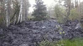 О страшном оползне в лесном массиве сообщили жители Катав-Ивановска