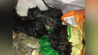 Маленьких котят выбросили на мусорку в Магнитогорске