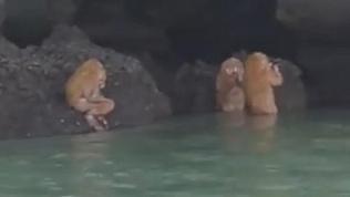 Странные существа напугали туристов в Таиланде