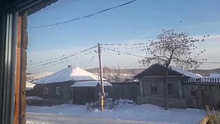 Нашествие «зимней саранчи»: птицы оккупировали Миасс