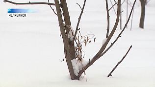 В Челябинске нашли дерево, посаженное Децлом