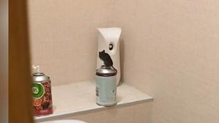 Челябинка не ночует дома из-за гостьи в туалете. ВИДЕО
