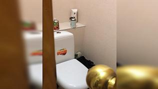 Гостья из канализации: мышь пришла понюхать освежитель воздуха в челябинской квартире
