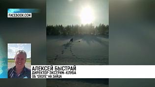 Житель Челябинска смог голыми руками поймать зайца