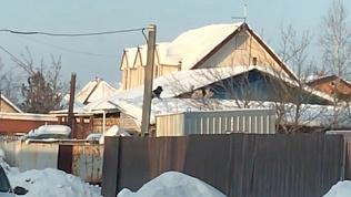 Летающие по крышам собаки в Кременкуле попали на видео