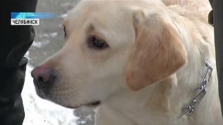 Незрячая семья завела профессиональную собаку-поводыря
