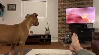 Как реагируют собаки на самую грустную сцену из «Короля Льва»