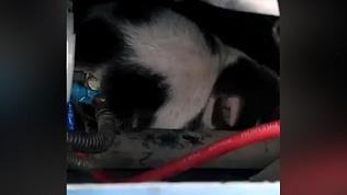 Южноуралец заглянул под капот и нашел там спящий сюрприз. ВИДЕО