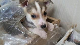 В Челябинской области щенков выставили на мороз в заклеенной коробке