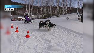 «Вжух» - гонки на собачьих упряжках прошли в области