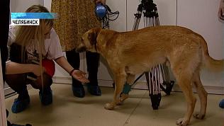 В центре Челябинска спасли раненую собаку