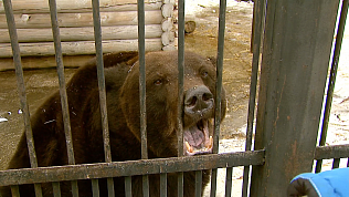 В Челябинском зоопарке уже начали просыпаться медведи