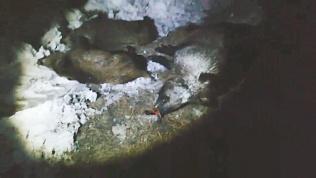 Браконьеров задержали с 65 килограммами мяса косули и лося