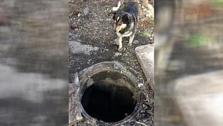 В Магнитогорске щенок провалился в открытый колодец