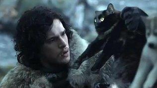 Эта кошка снялась во всех ваших любимых фильмах и всего за полгода