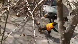 Кошка 4 дня была заложницей высокого дерева и собственного страха. Видео спасения