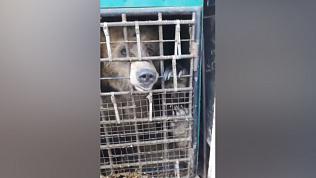 Владельцы «зоопарка» в ПАЗике остались безнаказанными. Видео зоозащитника