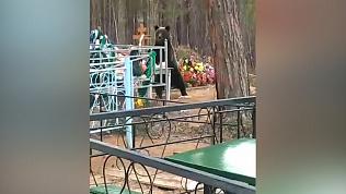 Медведя, поедающего конфеты на кладбище, засняли очевидцы