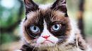 Умерла сердитая кошка Grumpy Cat