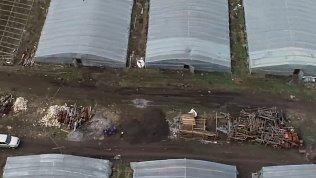 Огромный штраф грозит предпринимателю за нелегальный труд в тепличных хозяйствах